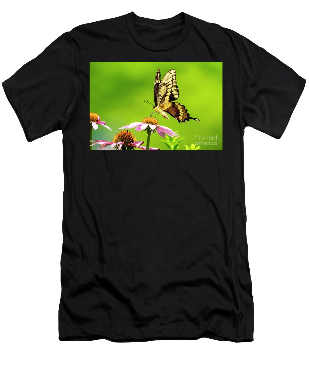 Black Swallowtail Men's T-Shirt (Athletic Fit) featuring the photograph Black Swallowtail Butterfly by Ben Graham