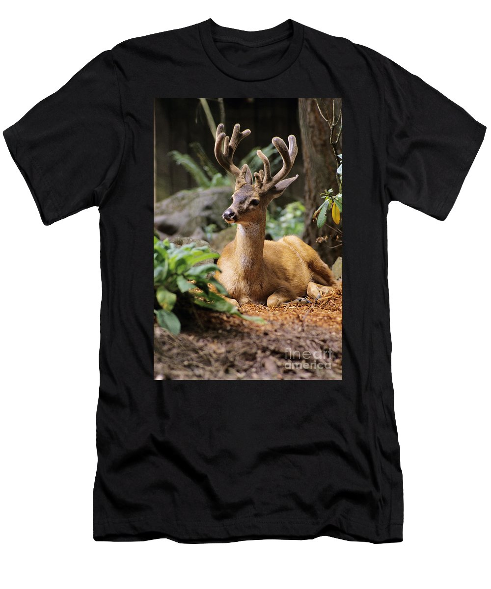 America Men's T-Shirt (Athletic Fit) featuring the photograph Black-tailed Deer by Greg Vaughn - Printscapes