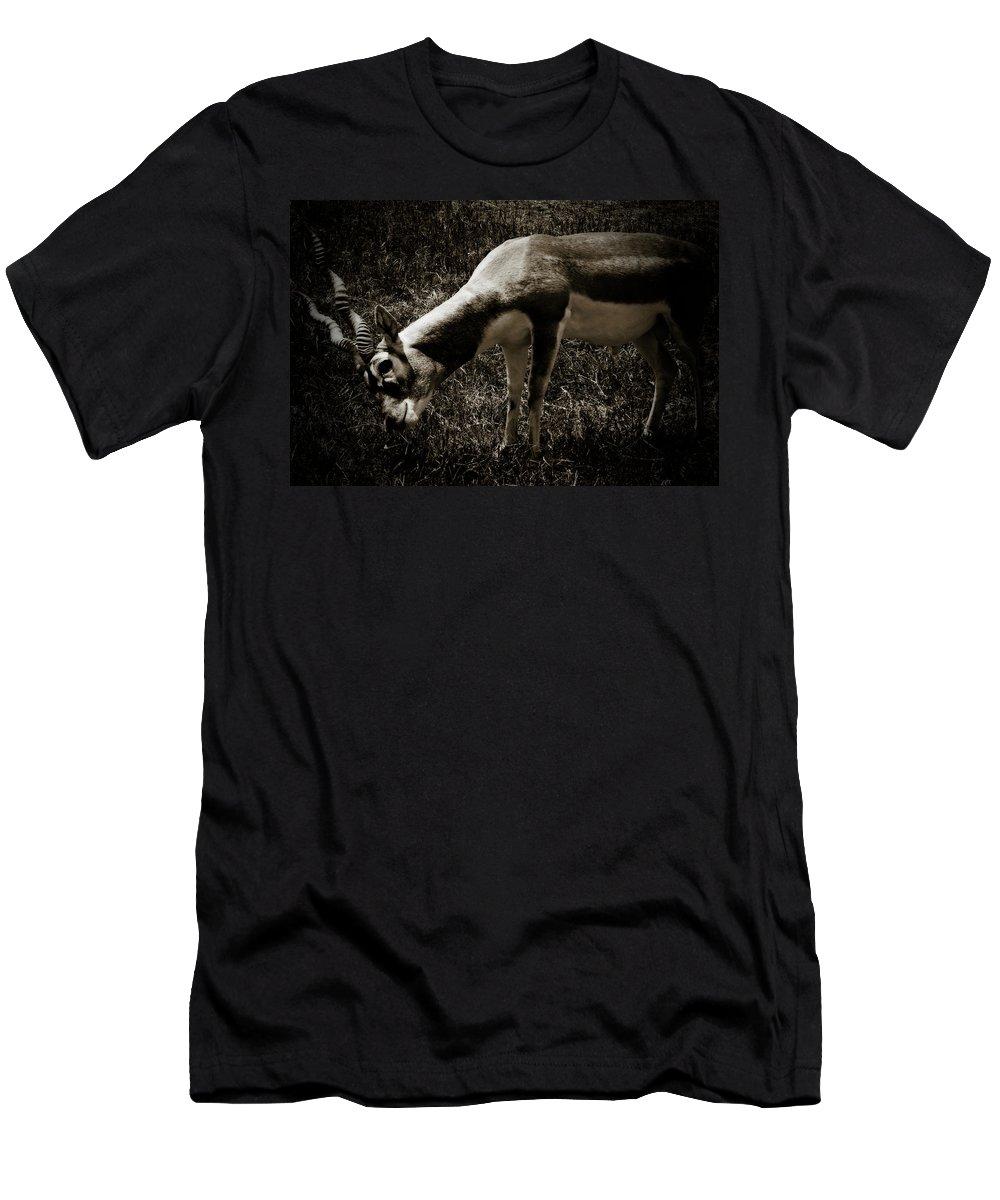 Blackbuck Men's T-Shirt (Athletic Fit) featuring the photograph Blackbuck by Douglas Barnard