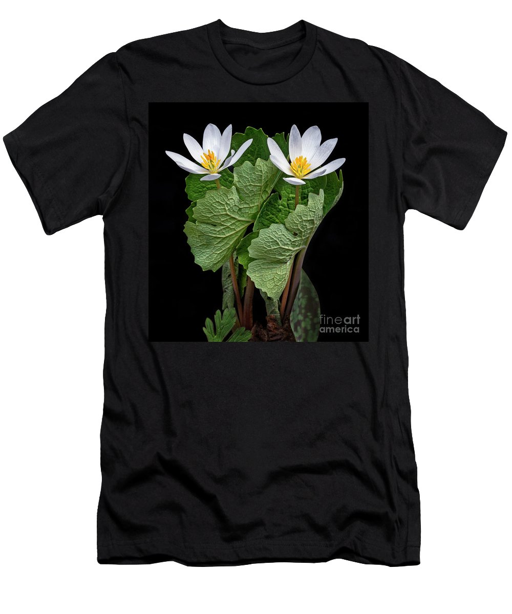 White Men's T-Shirt (Athletic Fit) featuring the photograph Bloodroot Duo by Emma England