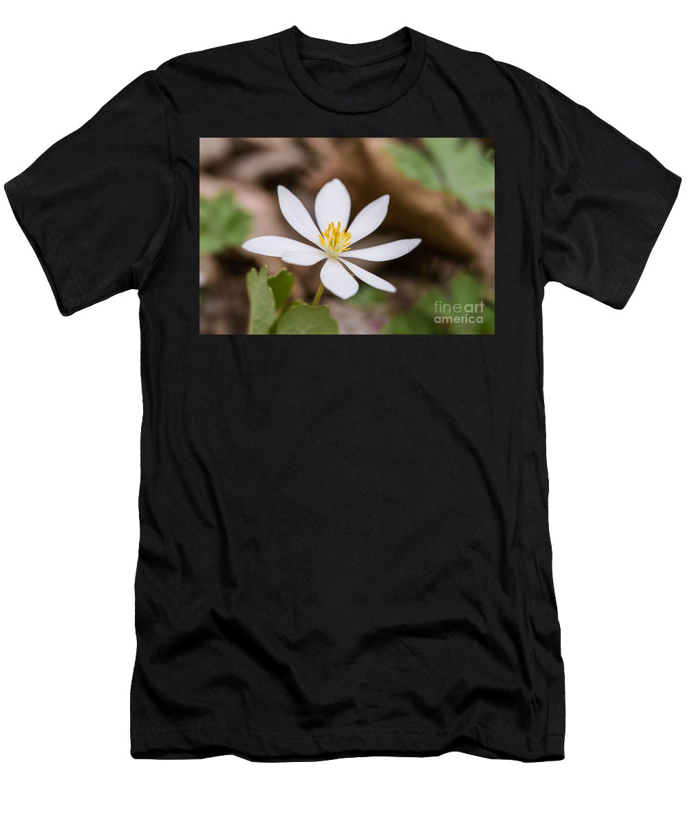 Bloodroot Men's T-Shirt (Athletic Fit) featuring the photograph Bloodroot Wildflower by Nikki Vig