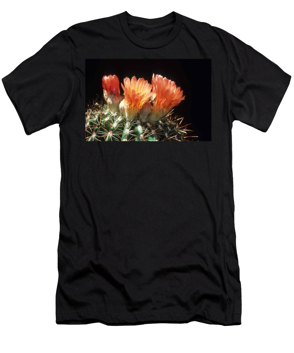 Barrel Cactus Men's T-Shirt (Athletic Fit) featuring the photograph Bloomin' Barrel by Laurie Paci