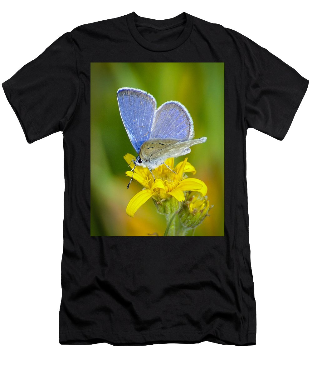Men's T-Shirt (Athletic Fit) featuring the photograph Blue Butterfly by Dan Kinghorn