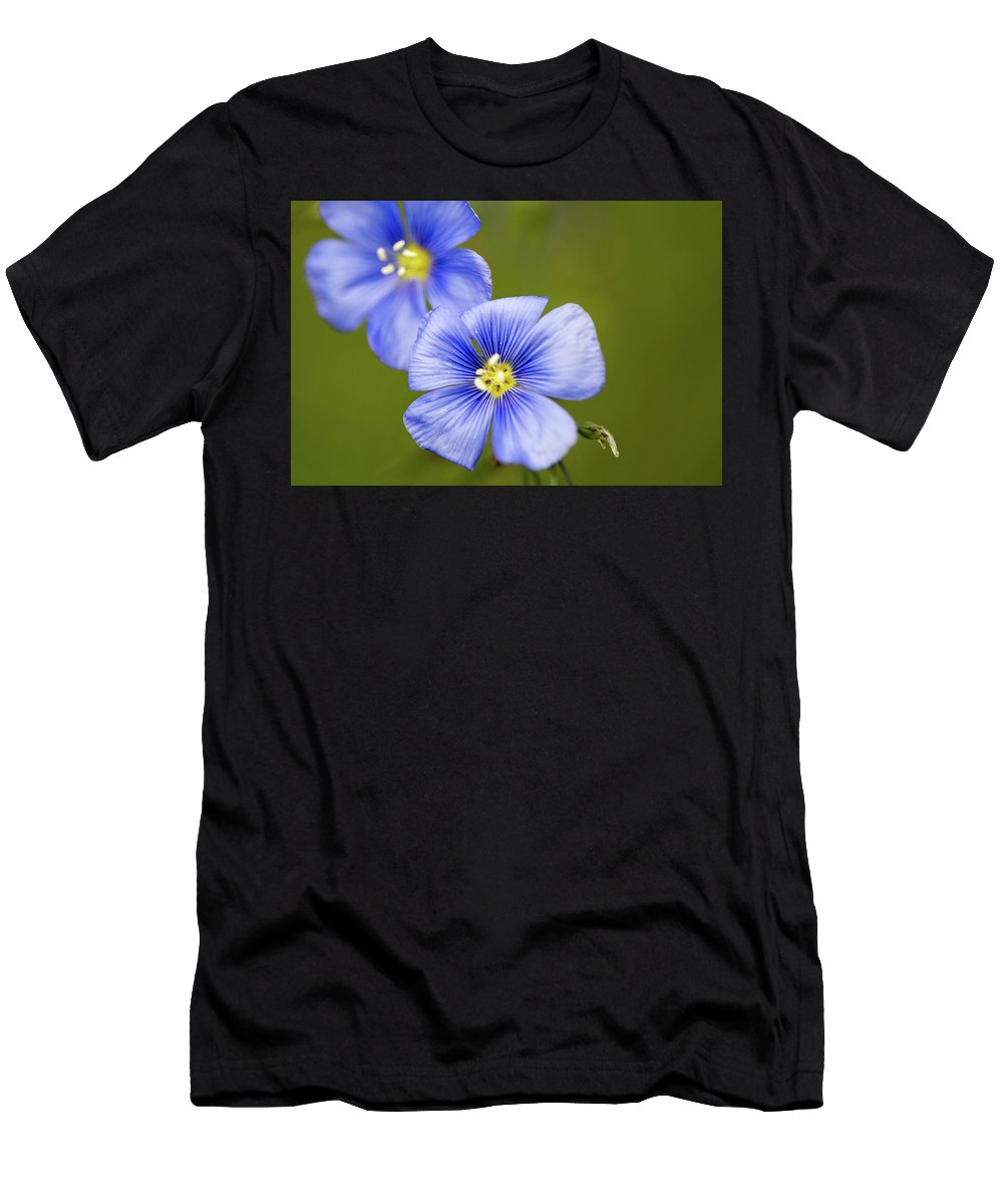 Crested Butte Men's T-Shirt (Athletic Fit) featuring the photograph Blue Flax #2 by Meagan Watson