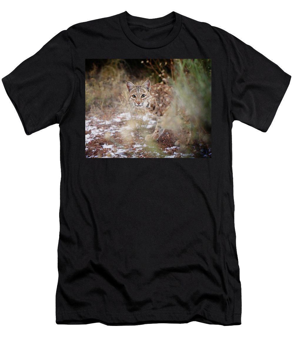 Bobcat Men's T-Shirt (Athletic Fit) featuring the photograph Bob On The Prowl by Kristi Johnson