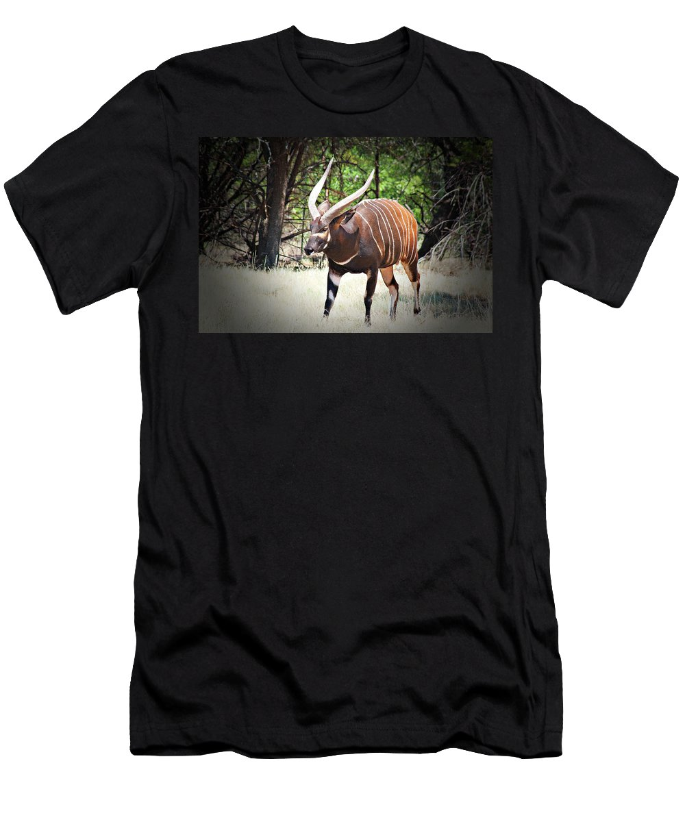 Antelope Men's T-Shirt (Athletic Fit) featuring the photograph Bongo by Douglas Barnard