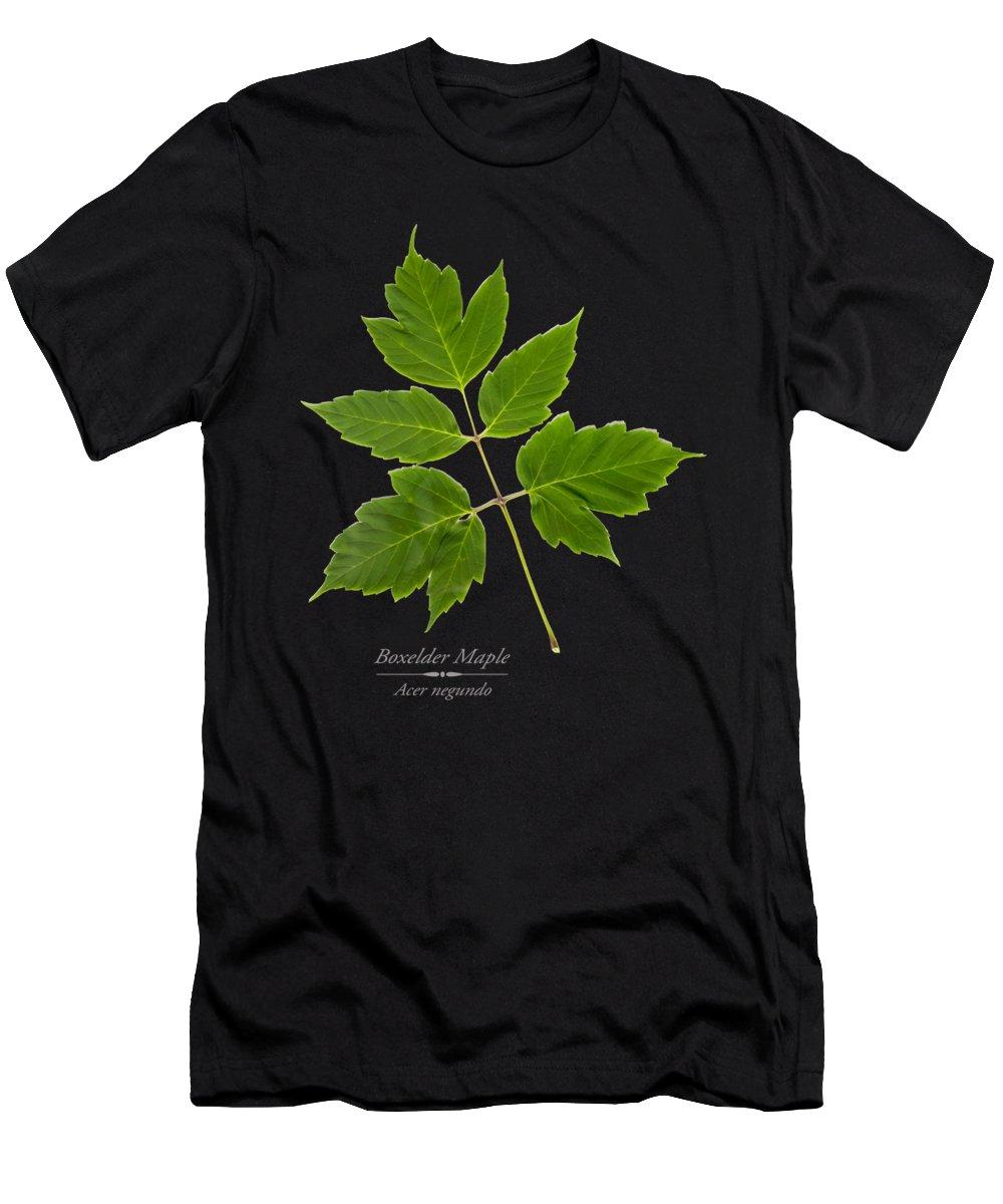 Designs Similar to Box Elder Maple Leaf
