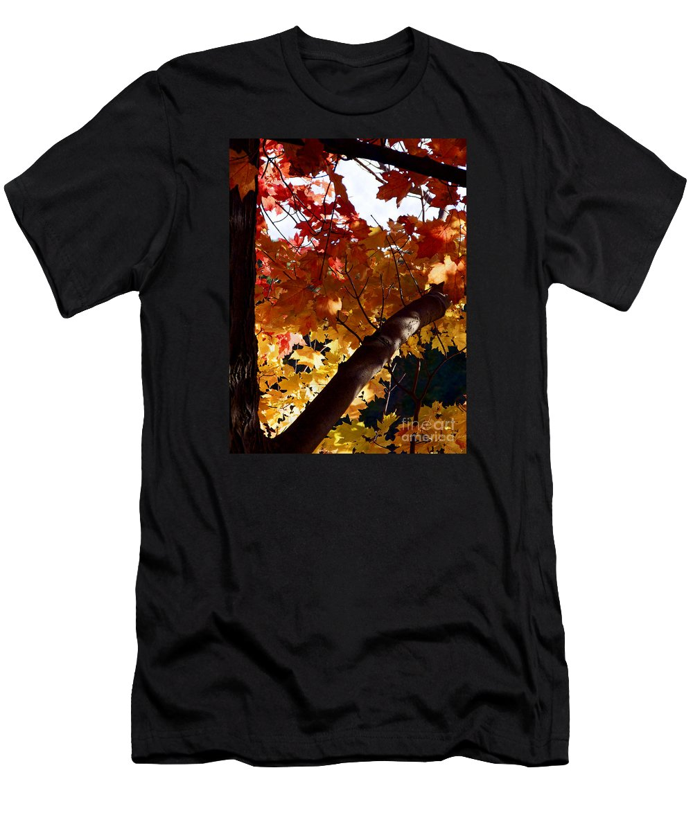 Autumn Men's T-Shirt (Athletic Fit) featuring the photograph Branching Into Autumn by Ann Horn