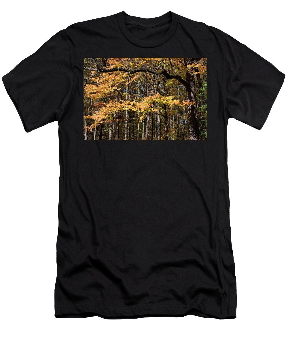 Digital Men's T-Shirt (Athletic Fit) featuring the photograph Branching Out by Jeff Roney