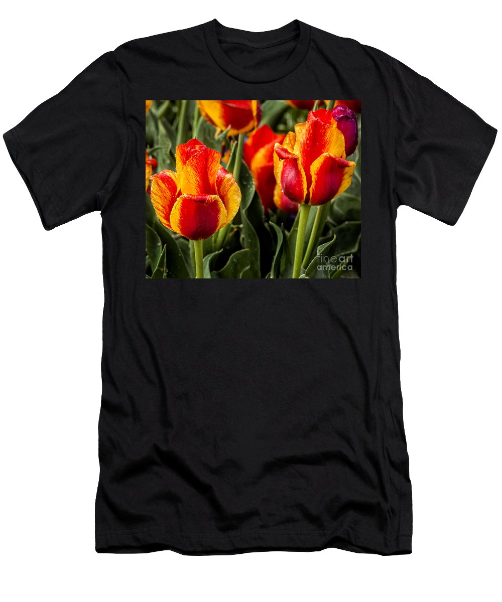 Tulips Men's T-Shirt (Athletic Fit) featuring the photograph Brightened Day by David Millenheft