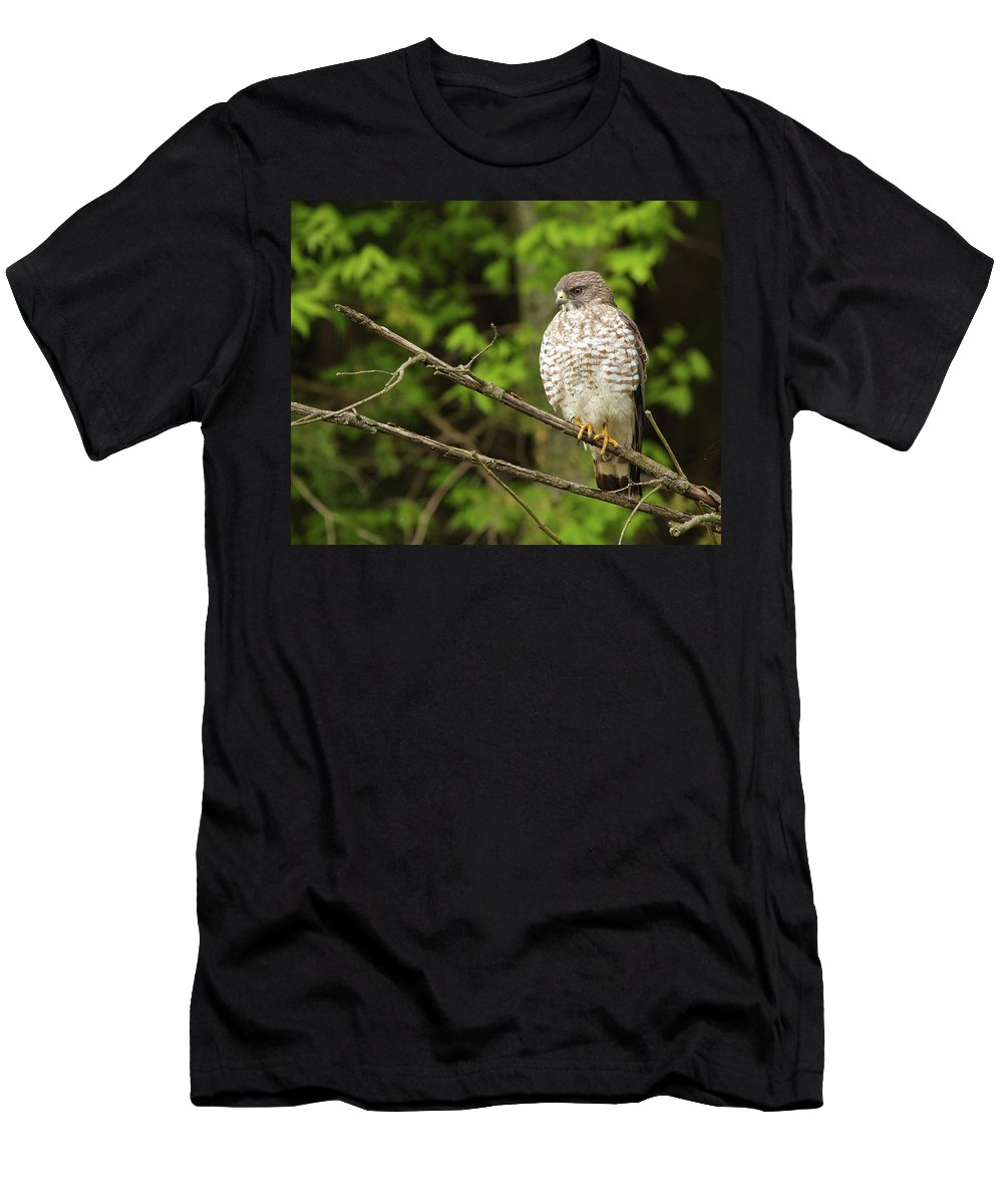 Hawk Men's T-Shirt (Athletic Fit) featuring the photograph Broad Winged Hawk On The Lookout by Andy Favors
