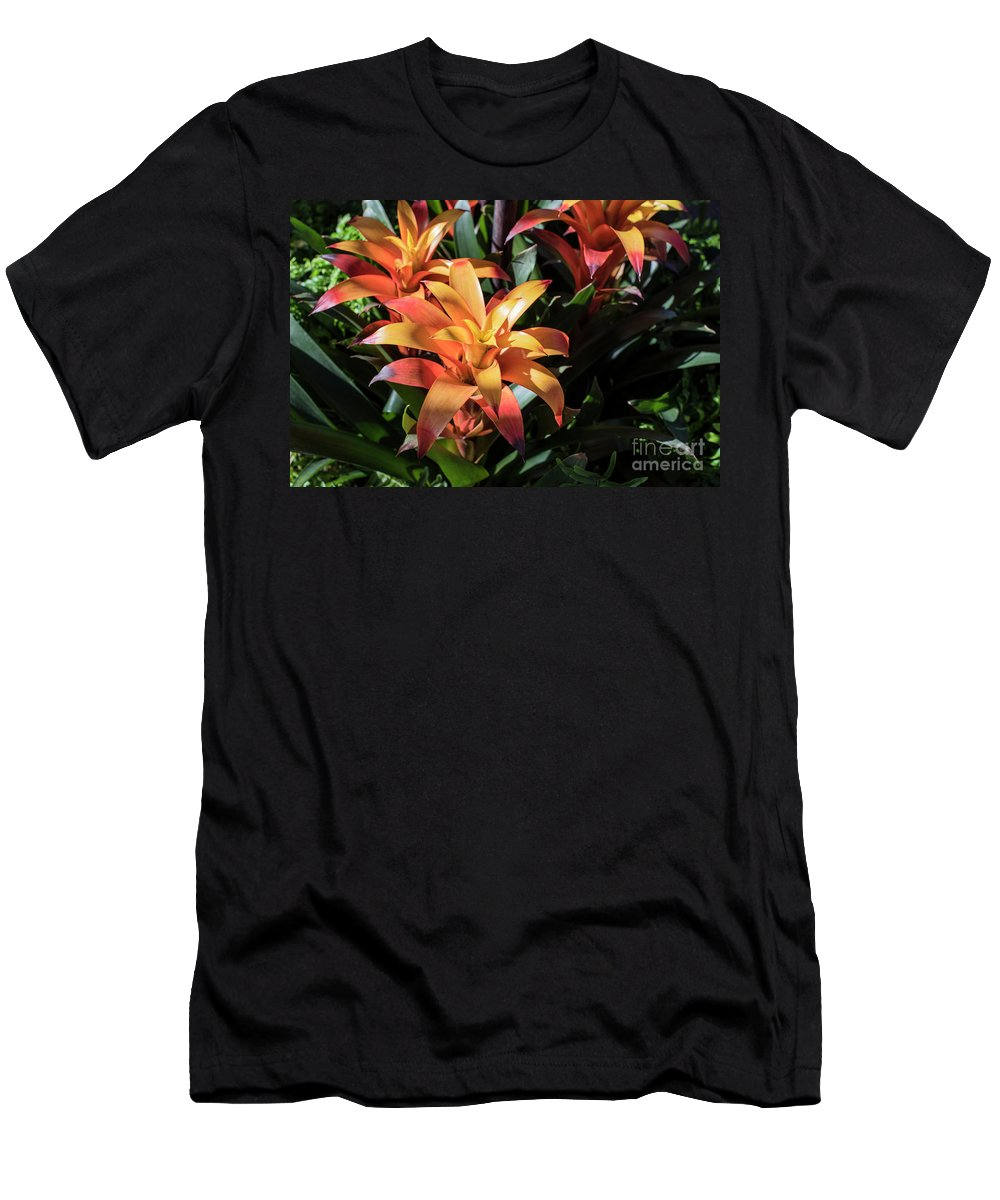 Succulent Men's T-Shirt (Athletic Fit) featuring the photograph Bromeliads by Judy Wolinsky