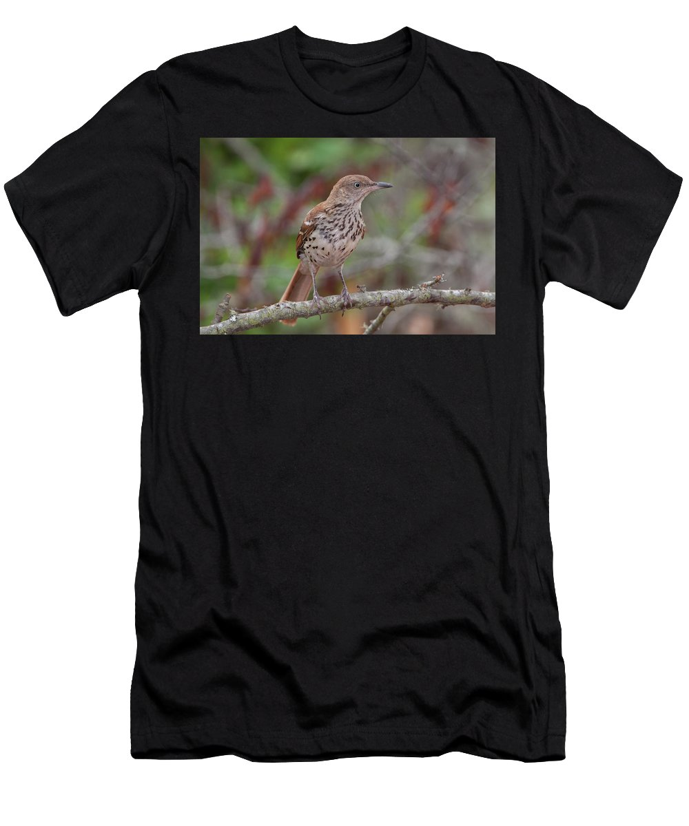 Ronnie Maum Men's T-Shirt (Athletic Fit) featuring the photograph Brown Thrasher by Ronnie Maum
