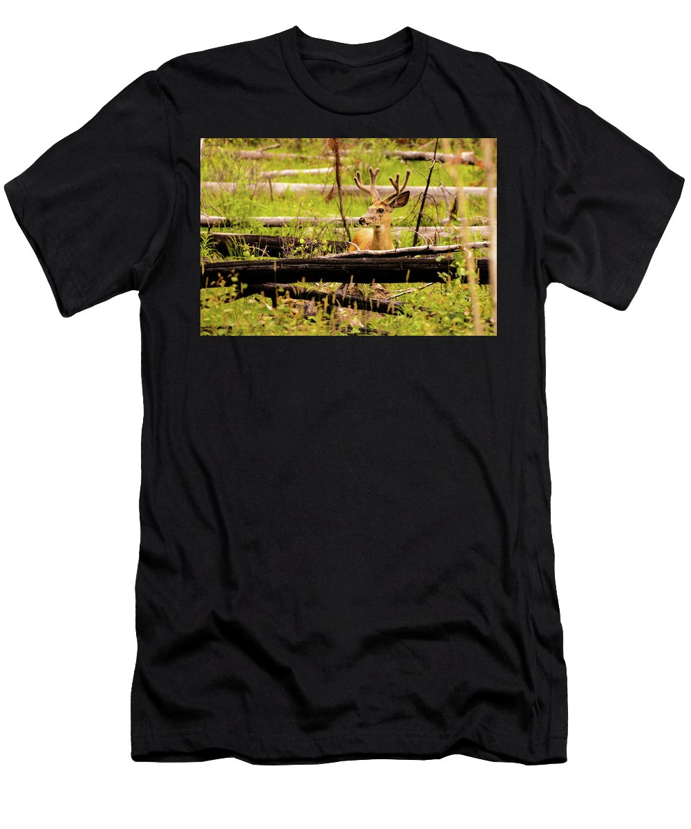 Animals Men's T-Shirt (Athletic Fit) featuring the photograph Buck In Velvet by Joe Ladendorf