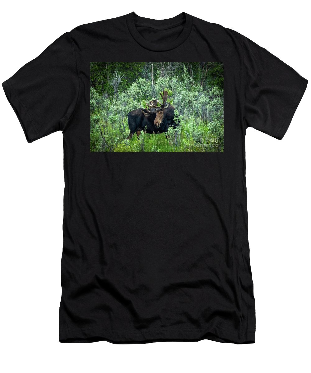 Moose Men's T-Shirt (Athletic Fit) featuring the photograph Bull Moose In The Bushes by Wayne Heim