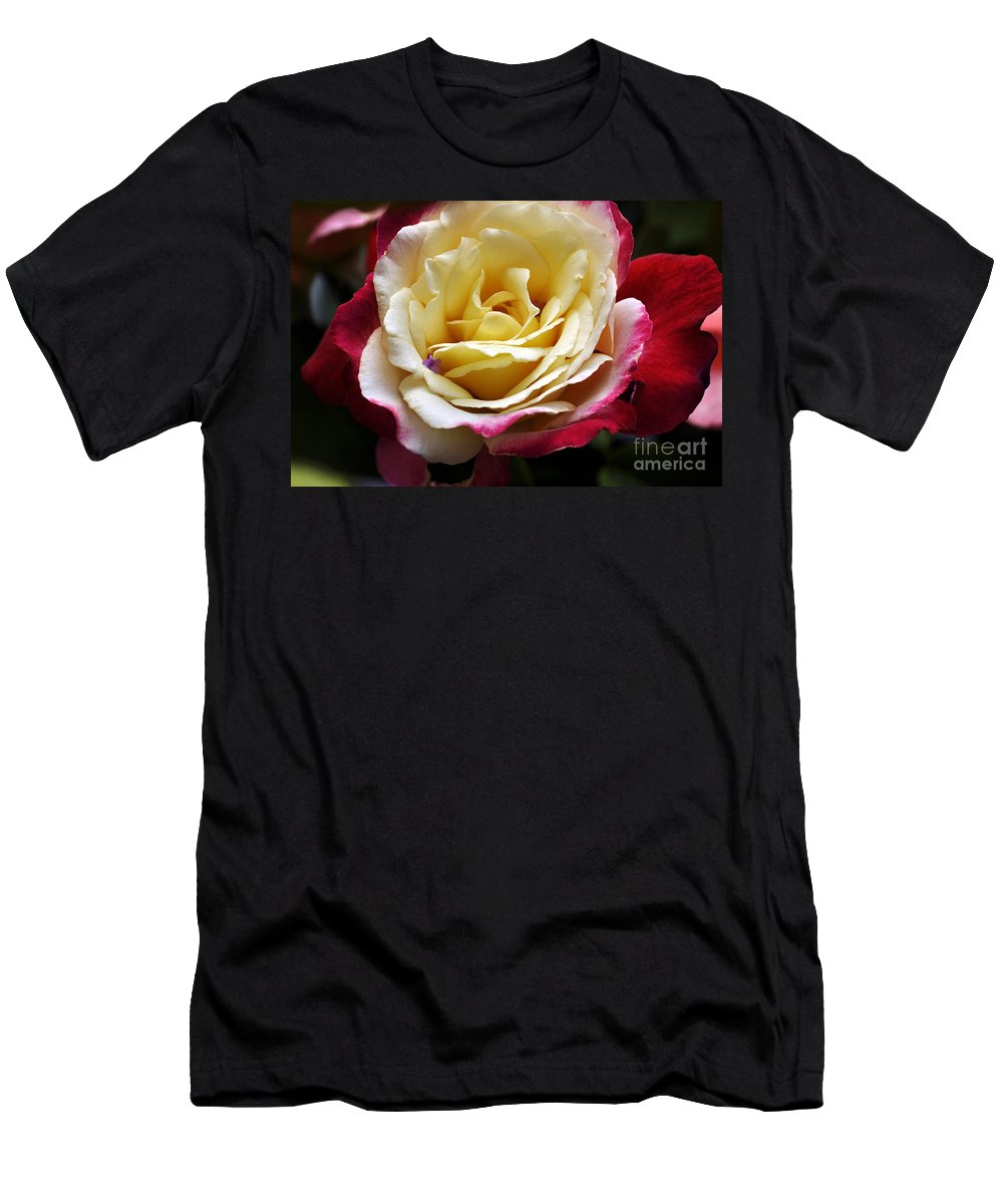 Clay Men's T-Shirt (Athletic Fit) featuring the photograph Burst Of Rose by Clayton Bruster