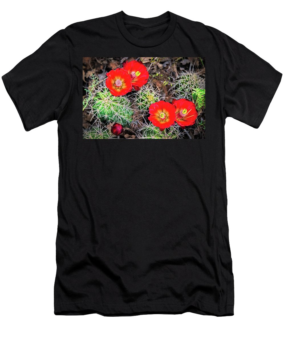 Amaizing Men's T-Shirt (Athletic Fit) featuring the photograph Cactus Bloom by Edgars Erglis