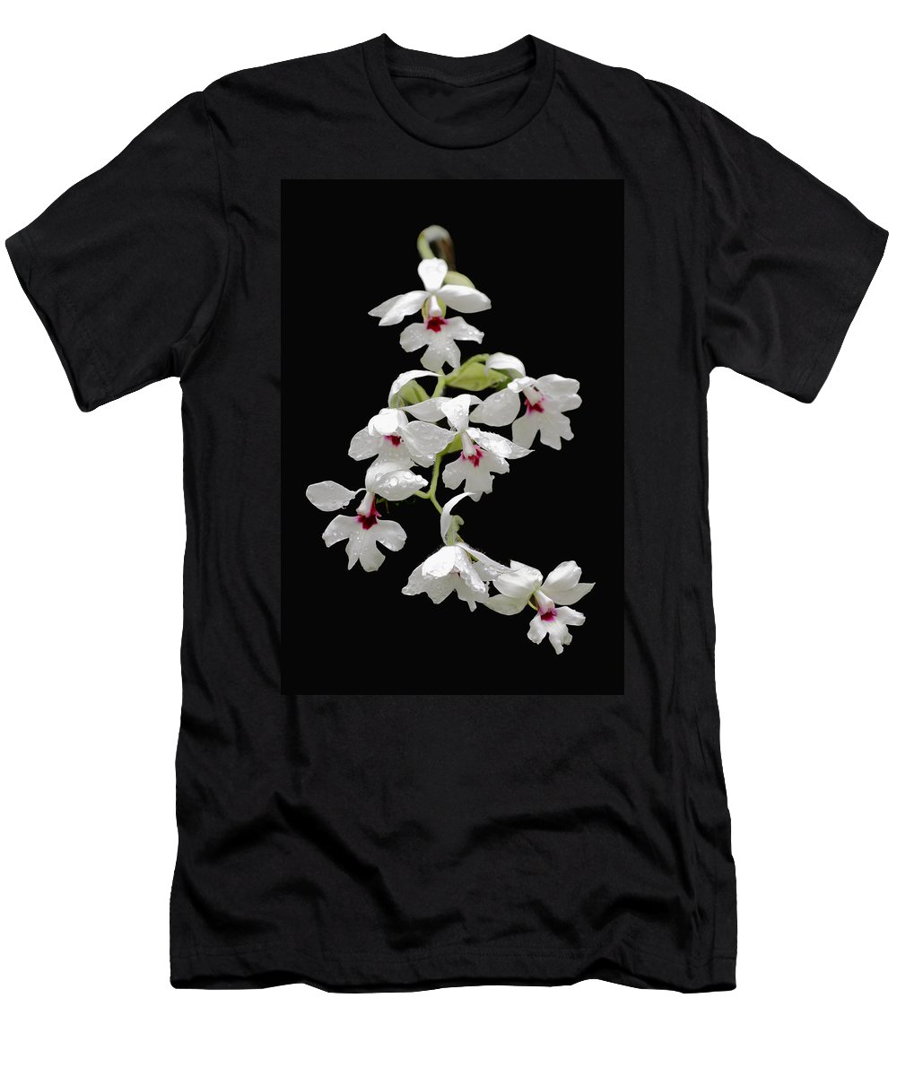 Beautiful Men's T-Shirt (Athletic Fit) featuring the photograph Calanthe Vestita Orchid by Rudy Umans