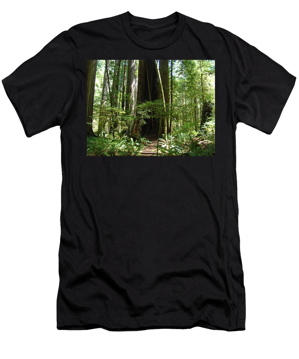 Redwood Men's T-Shirt (Athletic Fit) featuring the photograph California Redwood Trees Forest Art by Baslee Troutman