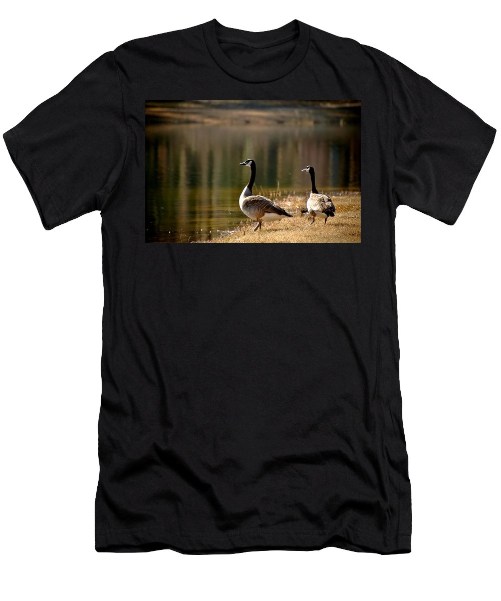 Goose Men's T-Shirt (Athletic Fit) featuring the photograph Canada Geese In Golden Sunlight by Rich Leighton