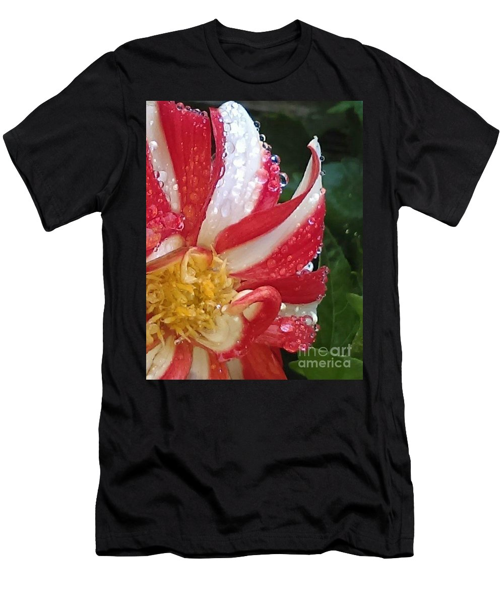Flowers Dahlia's Striped Flowers Men's T-Shirt (Athletic Fit) featuring the photograph Candy Cane Dahlia by Loretta Bueno