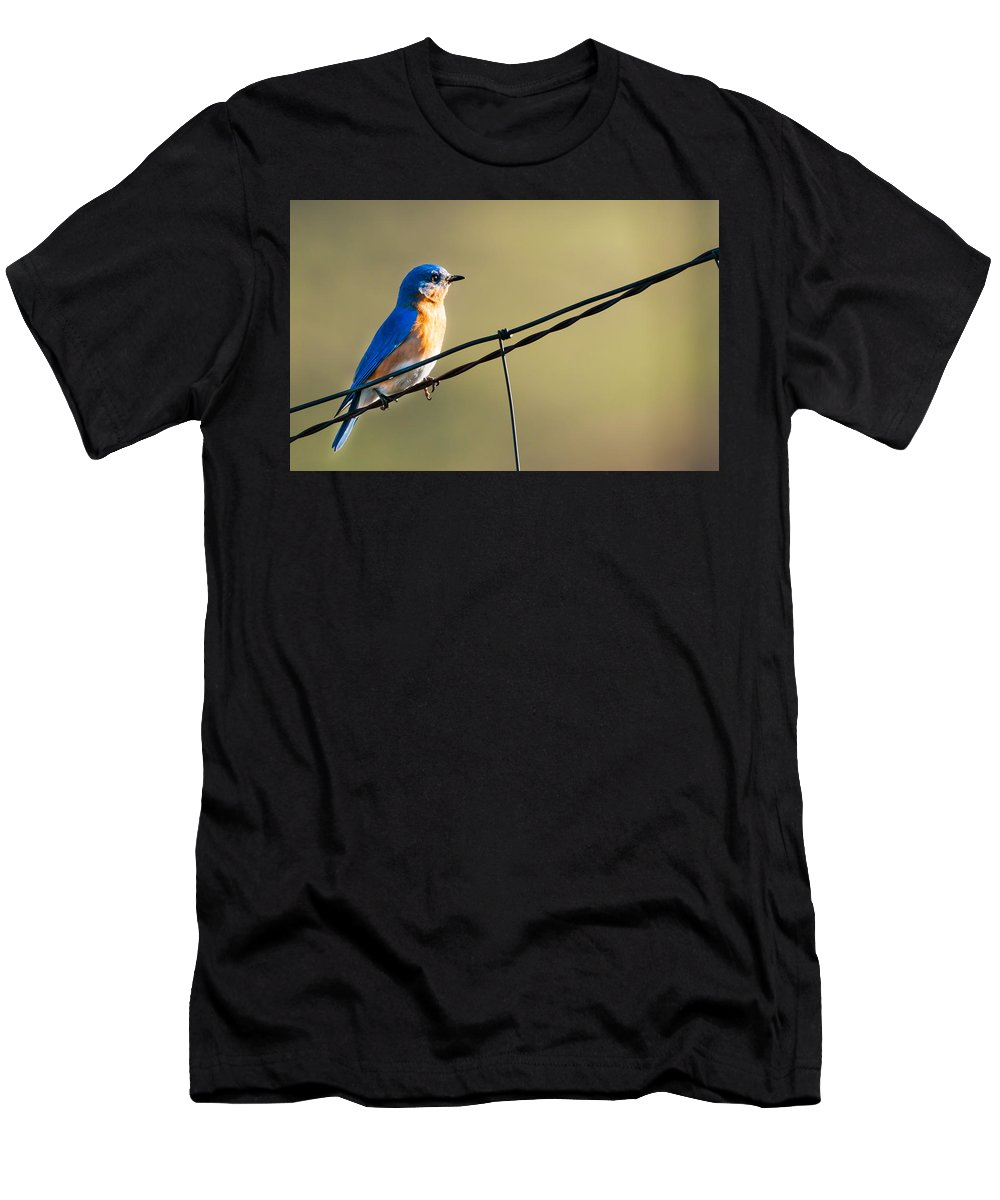 Bird Men's T-Shirt (Athletic Fit) featuring the photograph Captivating Blue by Heather Hubbard