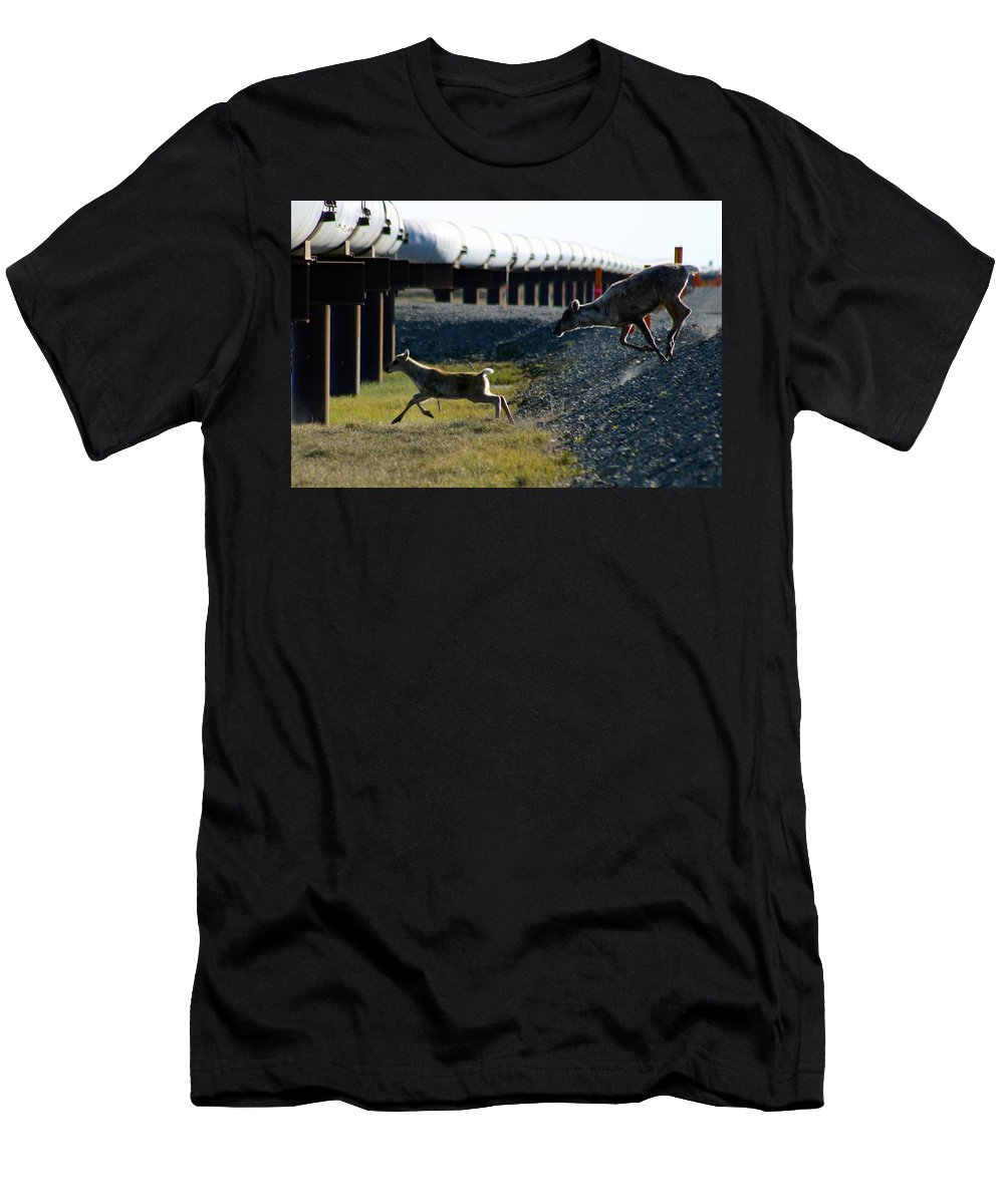 Caribou Men's T-Shirt (Athletic Fit) featuring the photograph Caribou Cow And Fawn by Anthony Jones