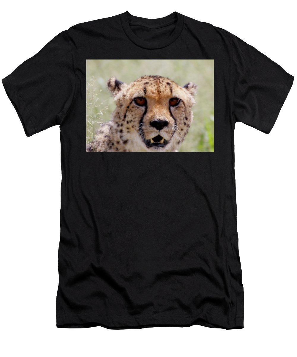 Cheetah Men's T-Shirt (Athletic Fit) featuring the painting Cheetah No.1 by Robert SORENSEN