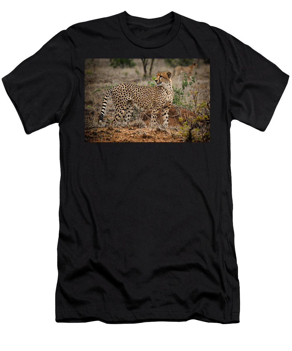 Mammal Men's T-Shirt (Athletic Fit) featuring the photograph Cheetah Male by Mari van Bosch