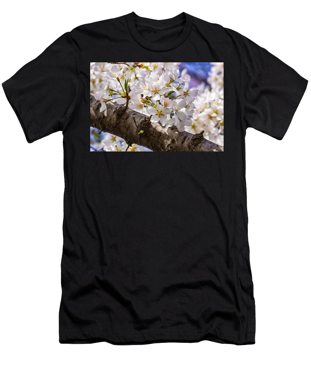 Cherry Blossoms Men's T-Shirt (Athletic Fit) featuring the photograph Cherry Tree by Carol Ward