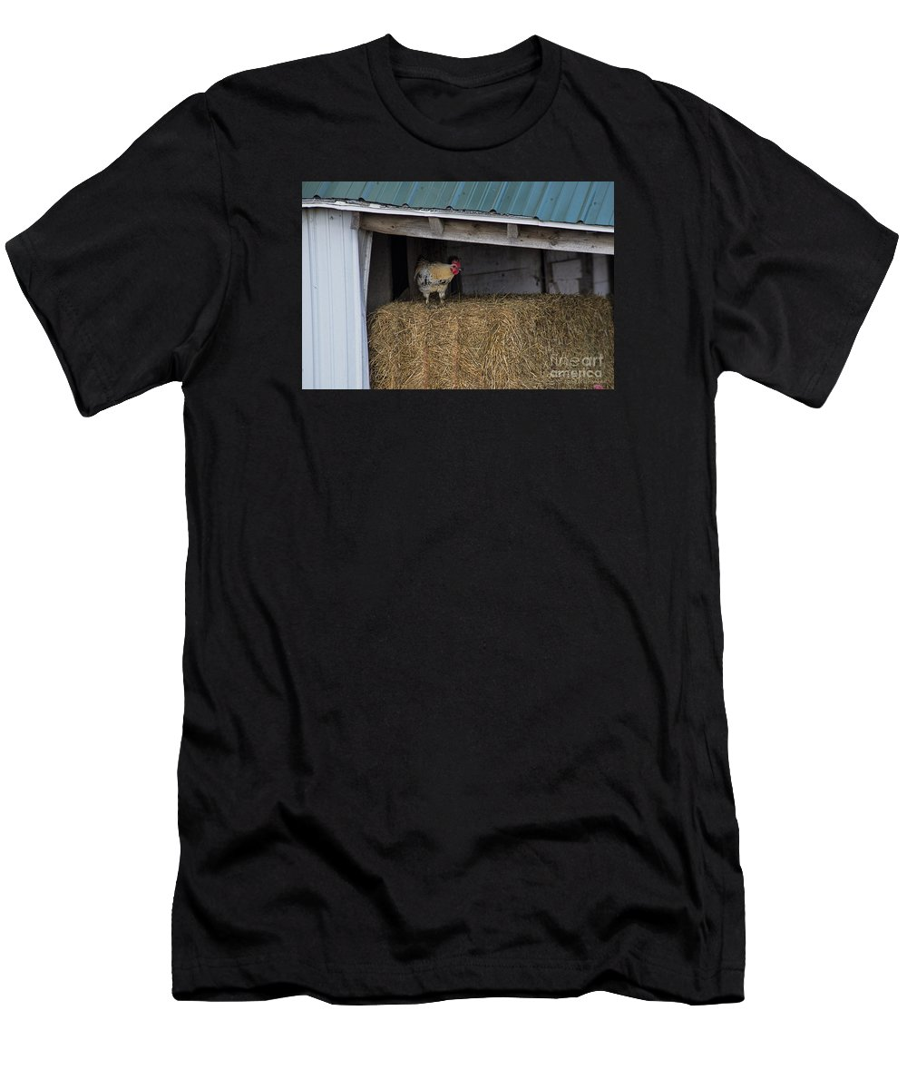 Chicken Men's T-Shirt (Athletic Fit) featuring the photograph Chicken In Barn by David Arment