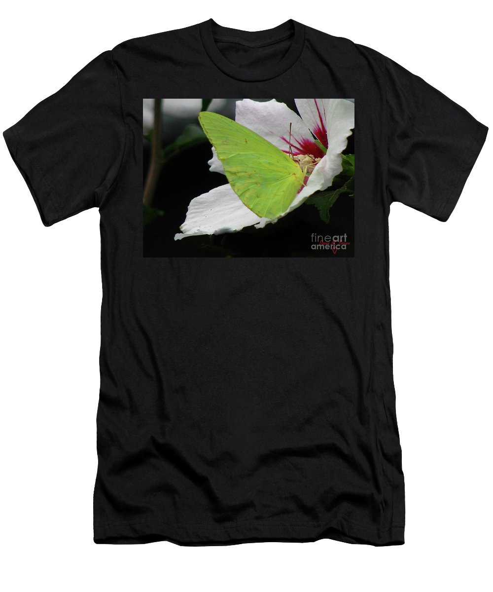 Insect Men's T-Shirt (Athletic Fit) featuring the photograph Cloudless Giant Sulphur Butterfly by Donna Brown