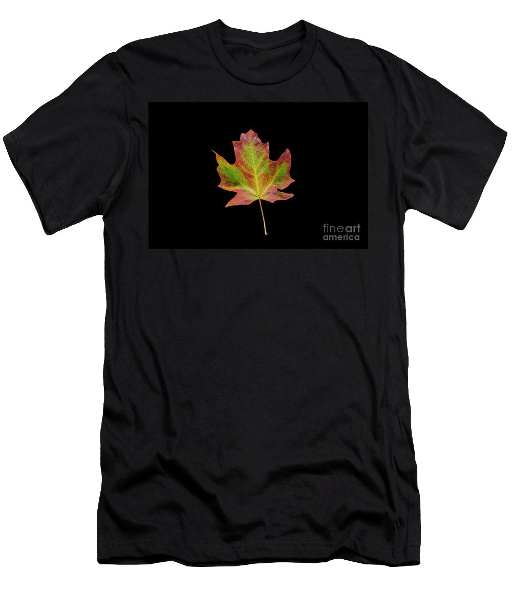 Minnesota Men's T-Shirt (Athletic Fit) featuring the photograph Colorful Maple Leaf by David Parker