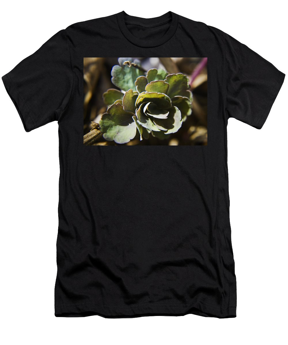 Aquilegia Men's T-Shirt (Athletic Fit) featuring the photograph Columbine Foliage by Teresa Mucha
