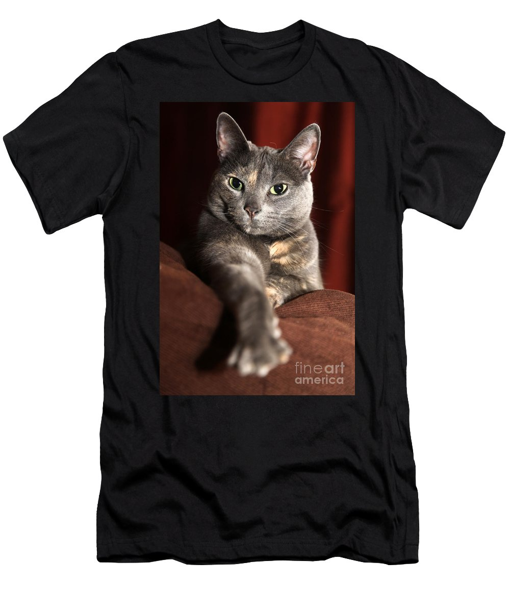 Kitty Men's T-Shirt (Athletic Fit) featuring the photograph Come Here by Amanda Barcon
