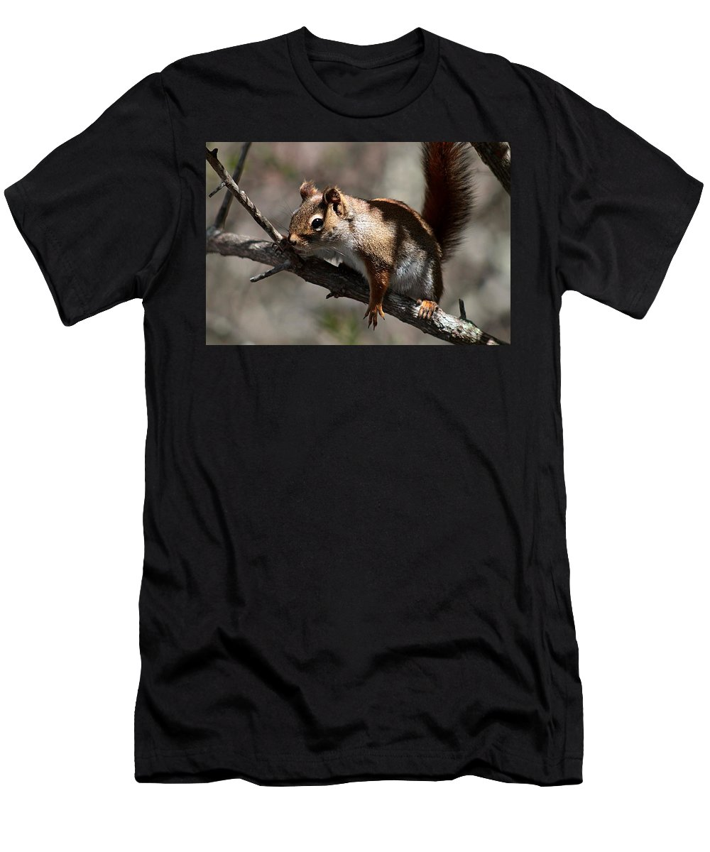 Red Squirrel Men's T-Shirt (Athletic Fit) featuring the photograph Contemplation by Linda Crockett