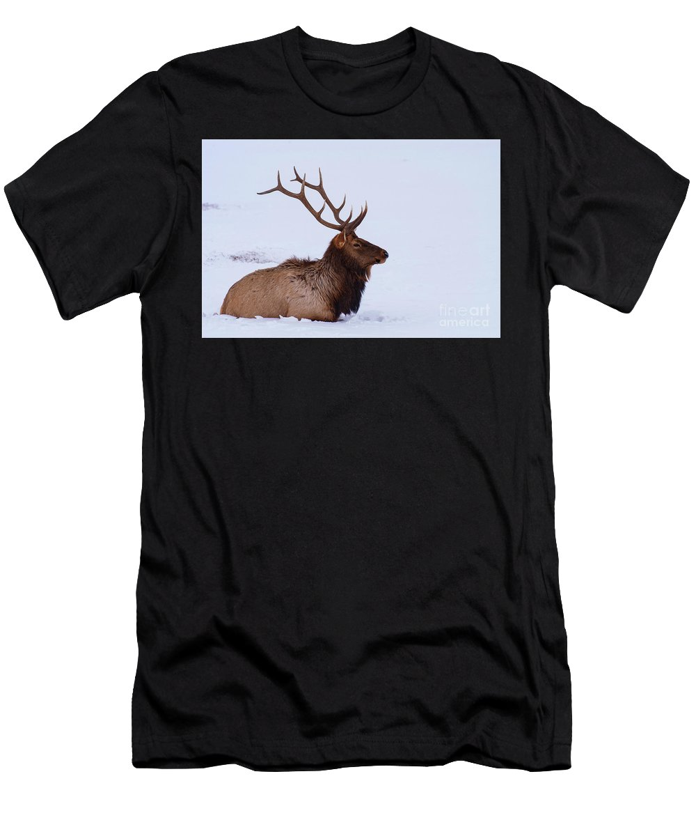 Elk Reservation Men's T-Shirt (Athletic Fit) featuring the photograph Cooling Off by Bob Phillips