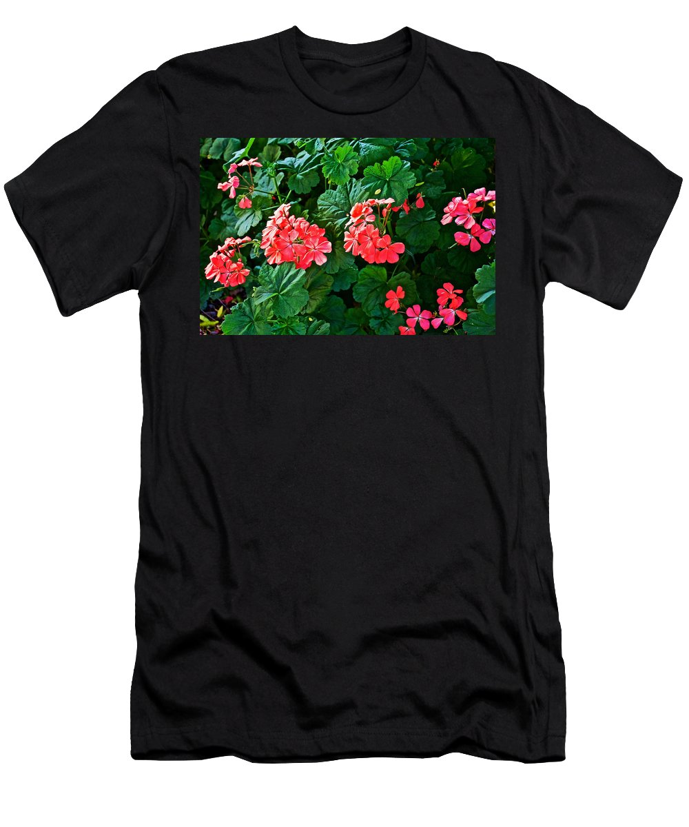 Coral Geraniums At Pilgrim Place In Claremont Men's T-Shirt (Athletic Fit) featuring the photograph Coral Geraniums At Pilgrim Place In Claremont-california  by Ruth Hager