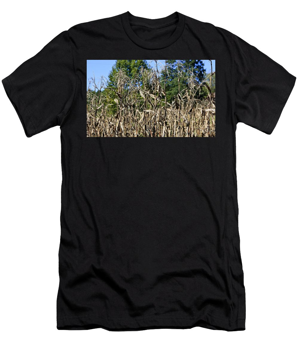 Corn Men's T-Shirt (Athletic Fit) featuring the photograph Corn Stalks Drying by Teresa Mucha