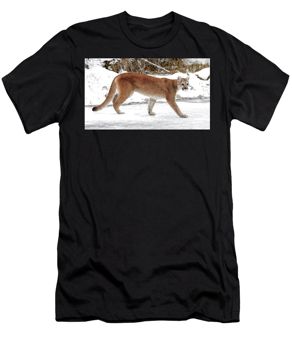 Cougar Men's T-Shirt (Athletic Fit) featuring the photograph Cougar On The Prowl by Athena Mckinzie