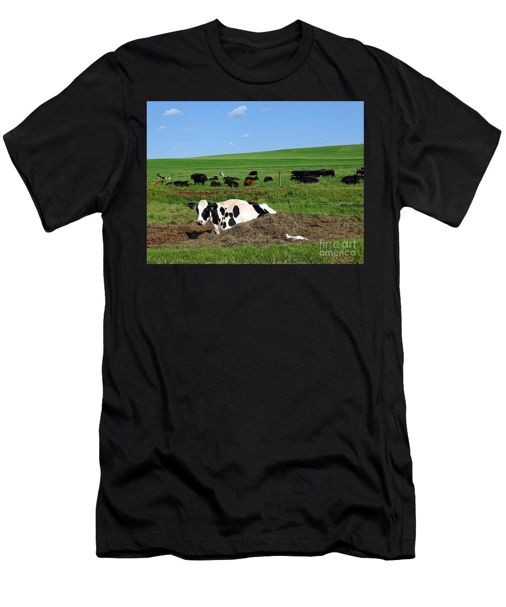 Farm Men's T-Shirt (Athletic Fit) featuring the photograph Countryside Cows by Ed Weidman