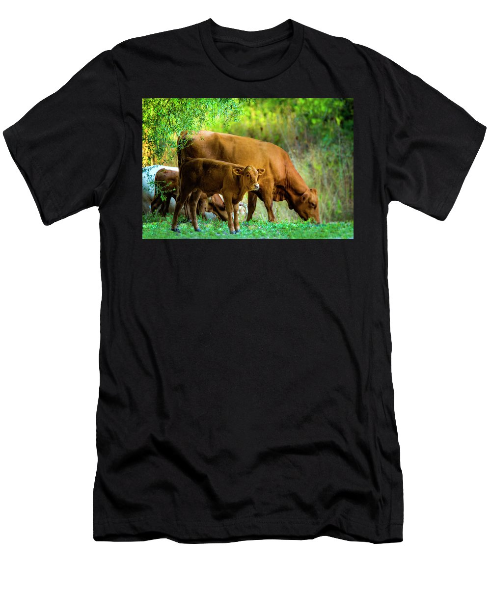 Cow And Calf Men's T-Shirt (Athletic Fit) featuring the photograph  Cow And Calf by Shay Weiss