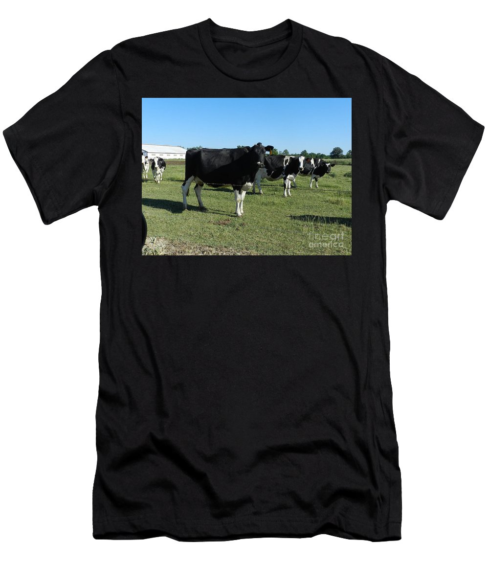 Cows Men's T-Shirt (Athletic Fit) featuring the photograph Cows In A Row by Richard Greiner