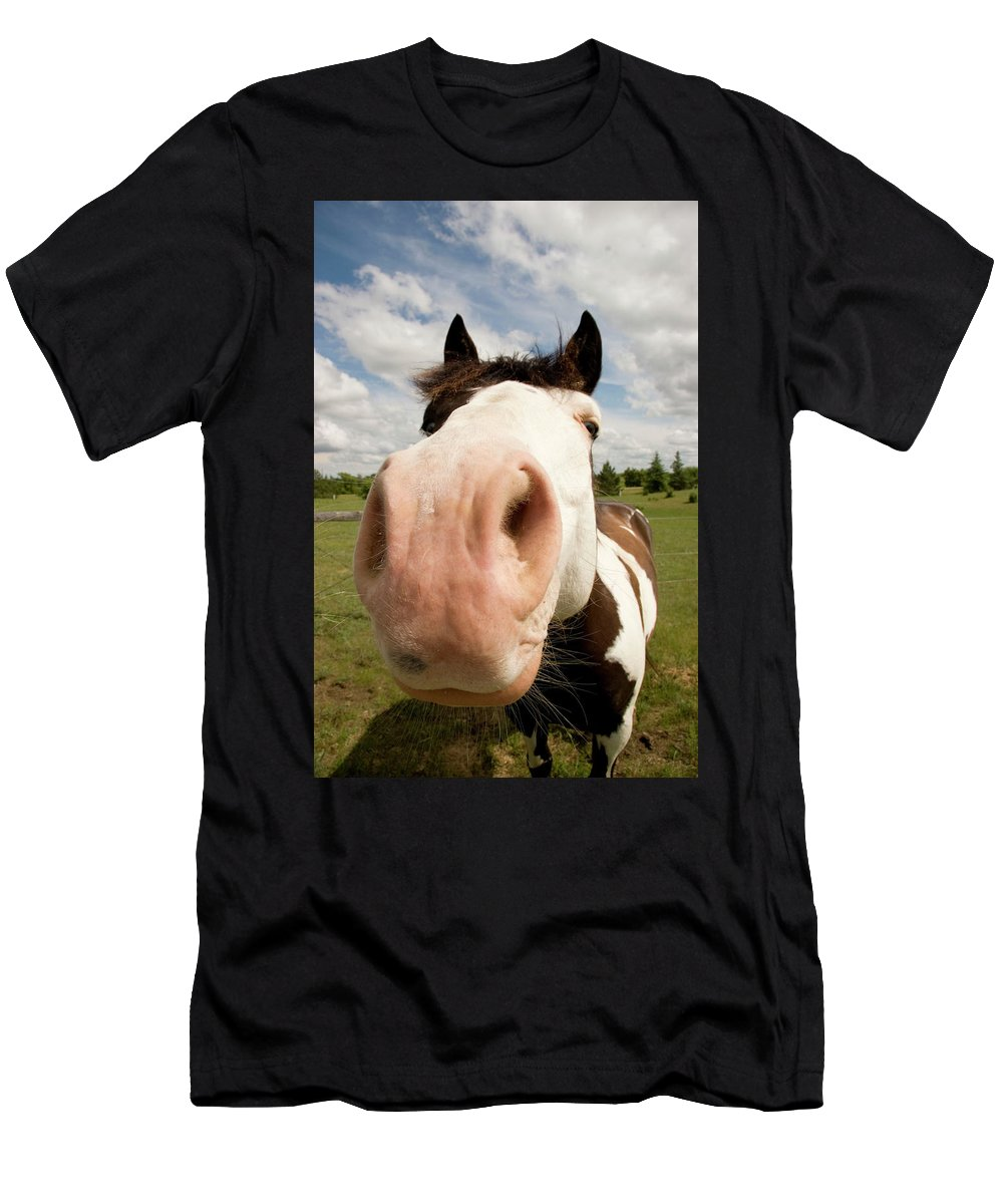 Horse Men's T-Shirt (Athletic Fit) featuring the photograph Curiosity by Deanna Paull