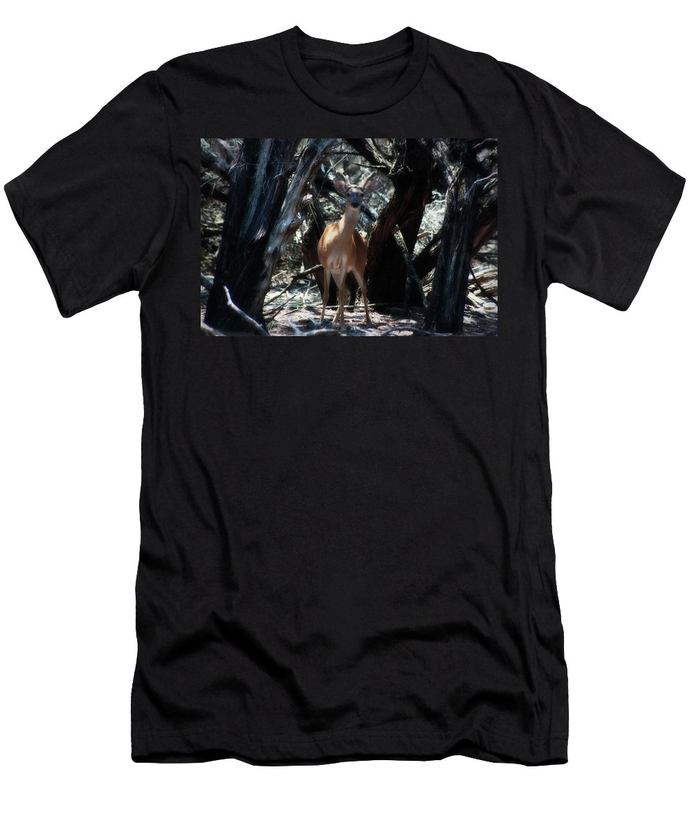 Axis Deer Men's T-Shirt (Athletic Fit) featuring the photograph Curious Bambi by Douglas Barnard