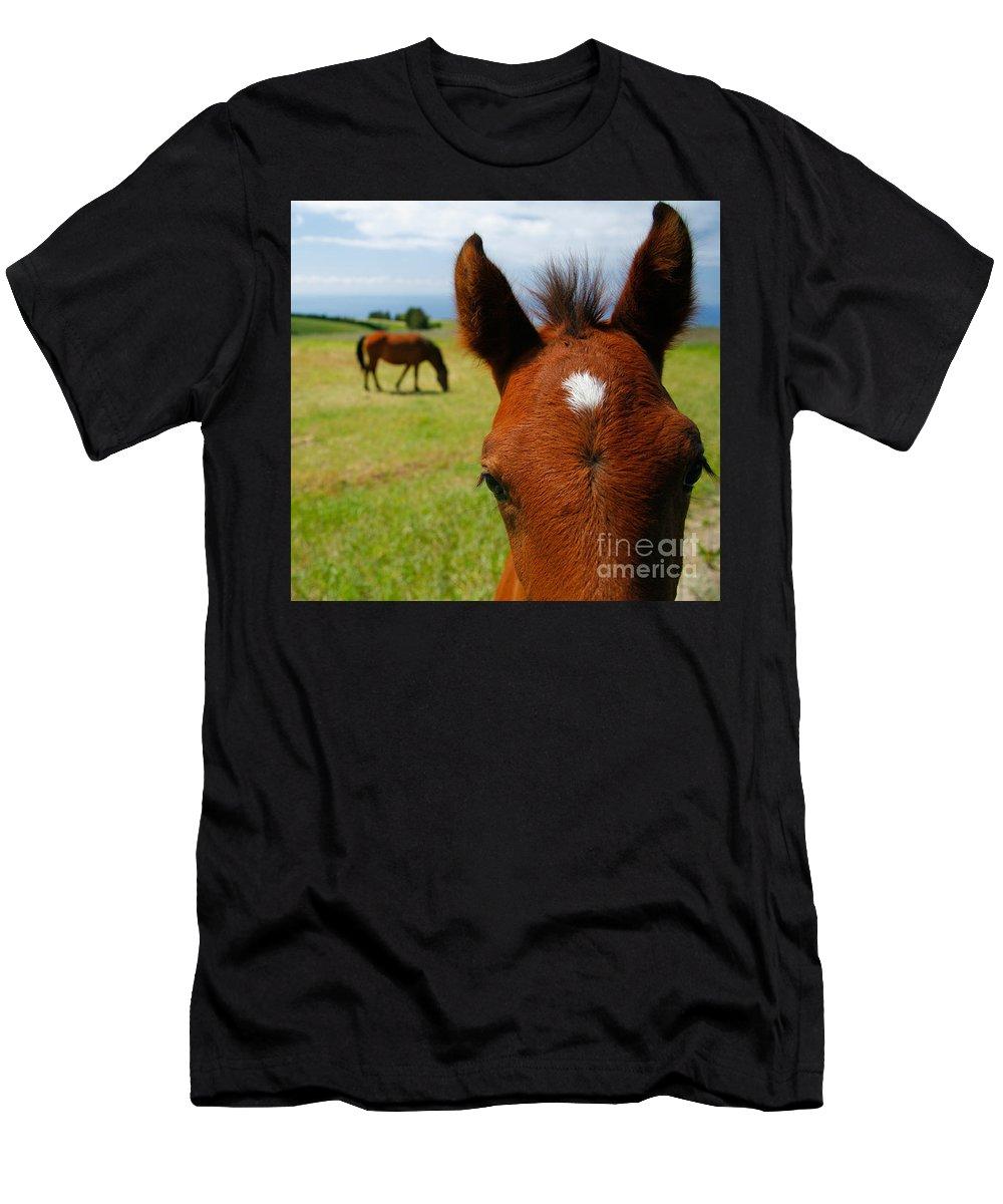 Farm Men's T-Shirt (Athletic Fit) featuring the photograph Curious Colt by Gaspar Avila