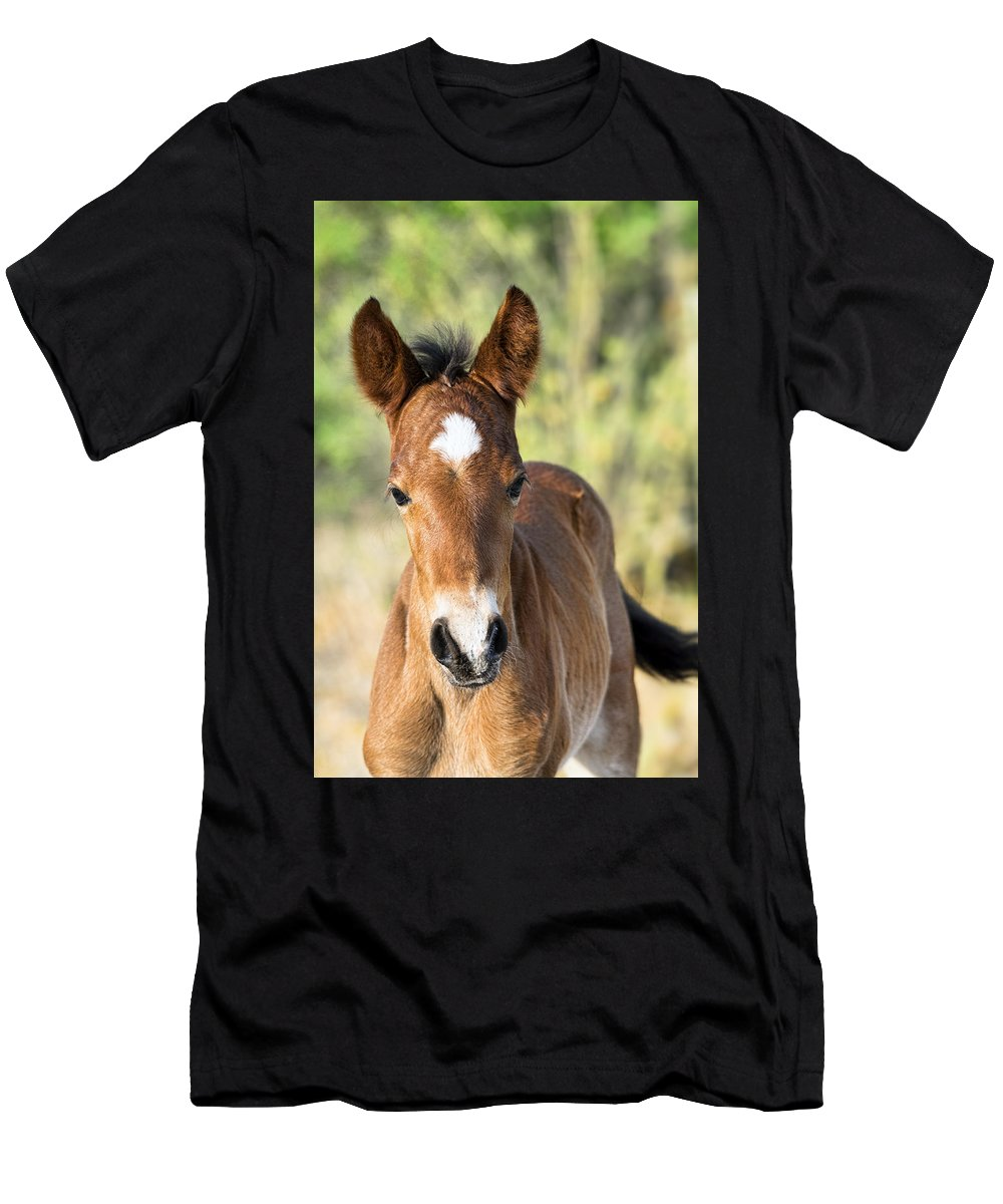 Wild Horses Men's T-Shirt (Athletic Fit) featuring the photograph Curious Little Colt by Saija Lehtonen