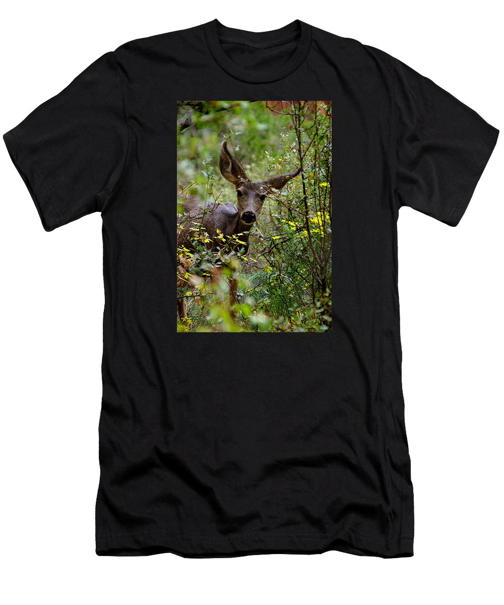 Mule Deer Men's T-Shirt (Athletic Fit) featuring the photograph Curious by Martin Massari