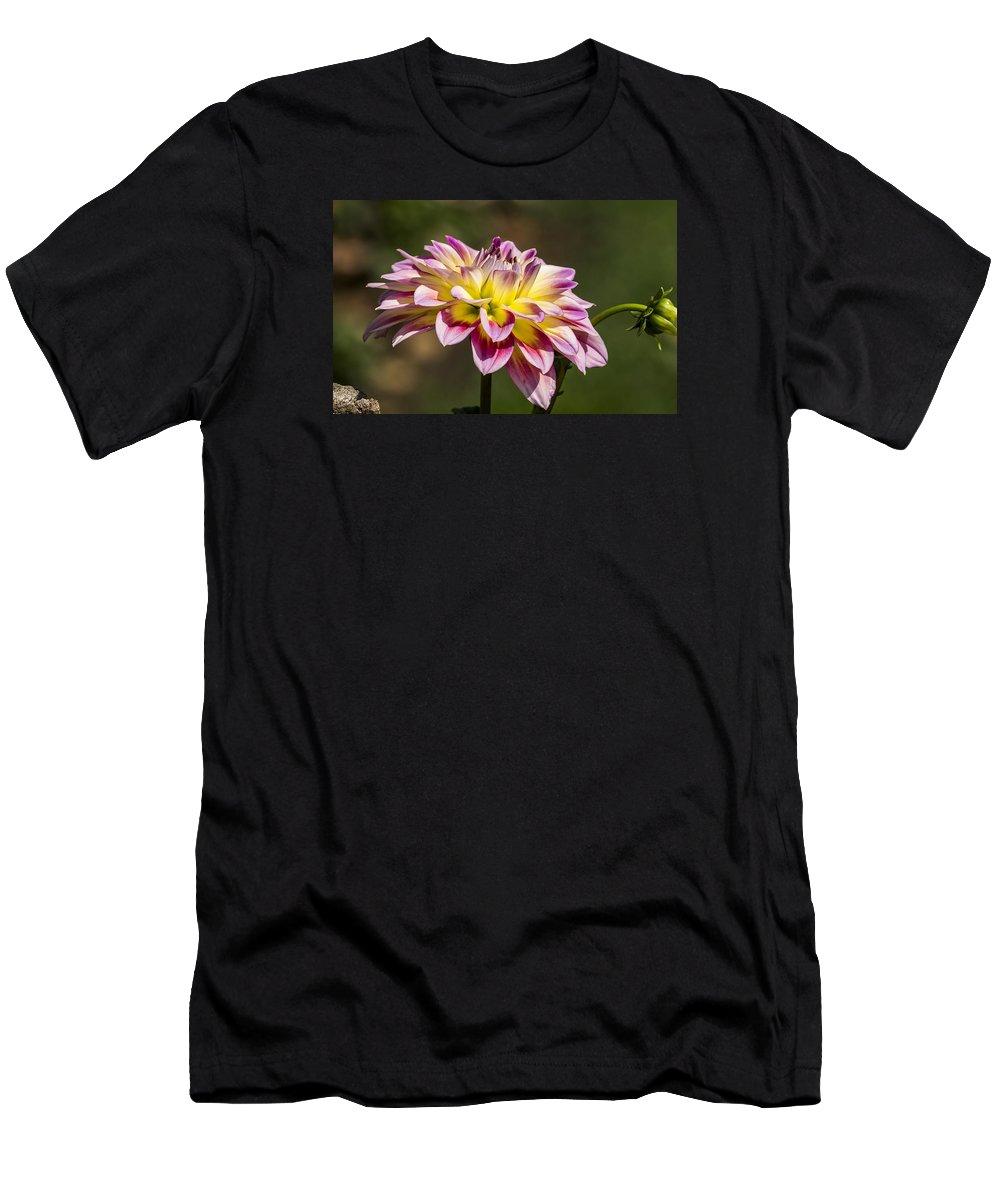 Dahlia Flower At Nishat Bagh Srinagar Kashmir India T Shirt For