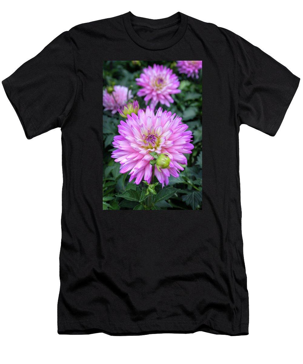 Dahlia Men's T-Shirt (Athletic Fit) featuring the photograph Dahlia by Soroush Mostafanejad